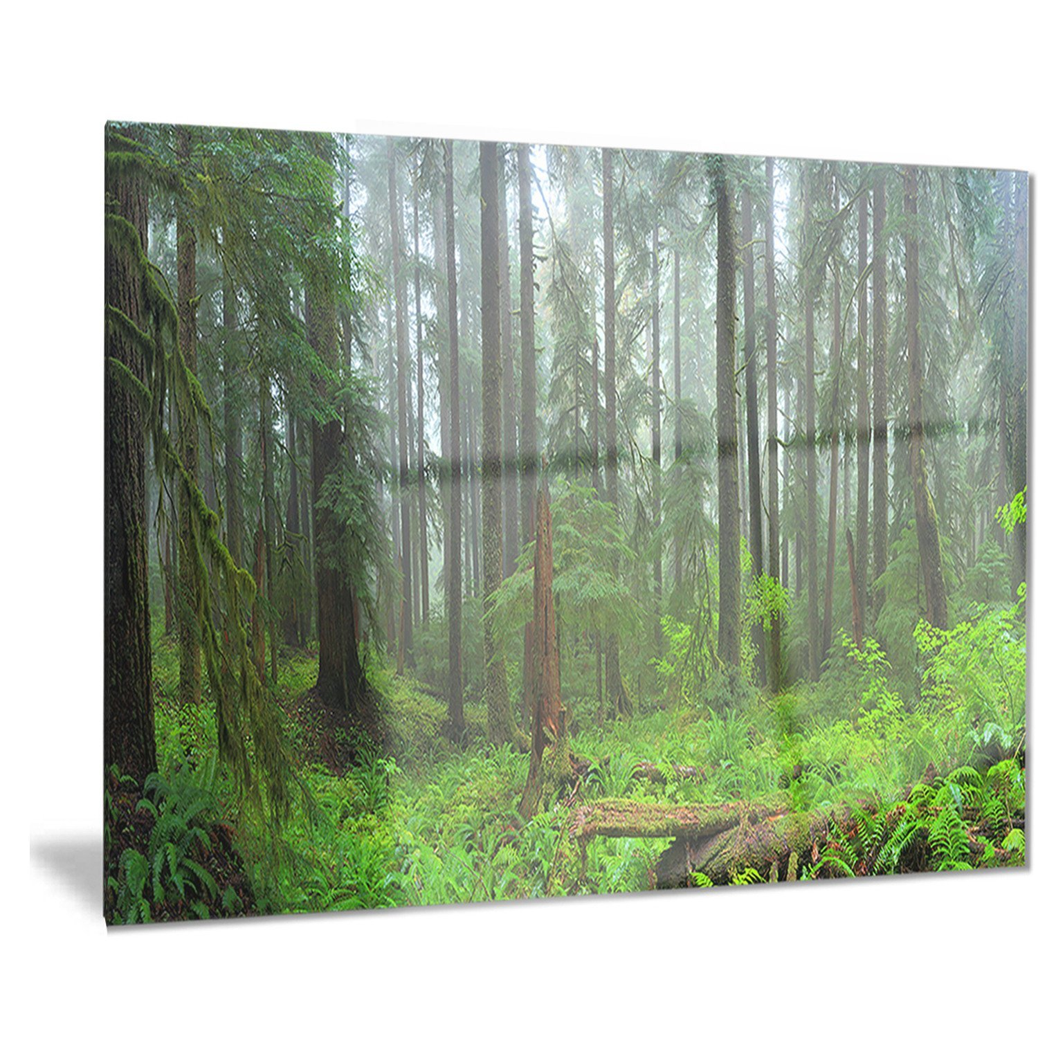 Designart HOH Rain Forest-Landscape Photography Metal Wall Art-MT8332-60x32-5 Panels 32 H/ x/ 60 W/ x/ 1 D 5PD 32/'/' H/ x/ 60/'/' W/ x/ 1/'/' D 5PD MT8332-373