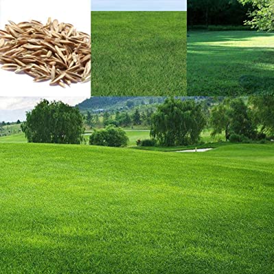 Znadna Seeds - Evergreen Perennial Seed Moss Seeds Grass Seed Grass Seed Ground Cover Seed Lawn-Like Growth Hardy Perennial for Garden : Garden & Outdoor