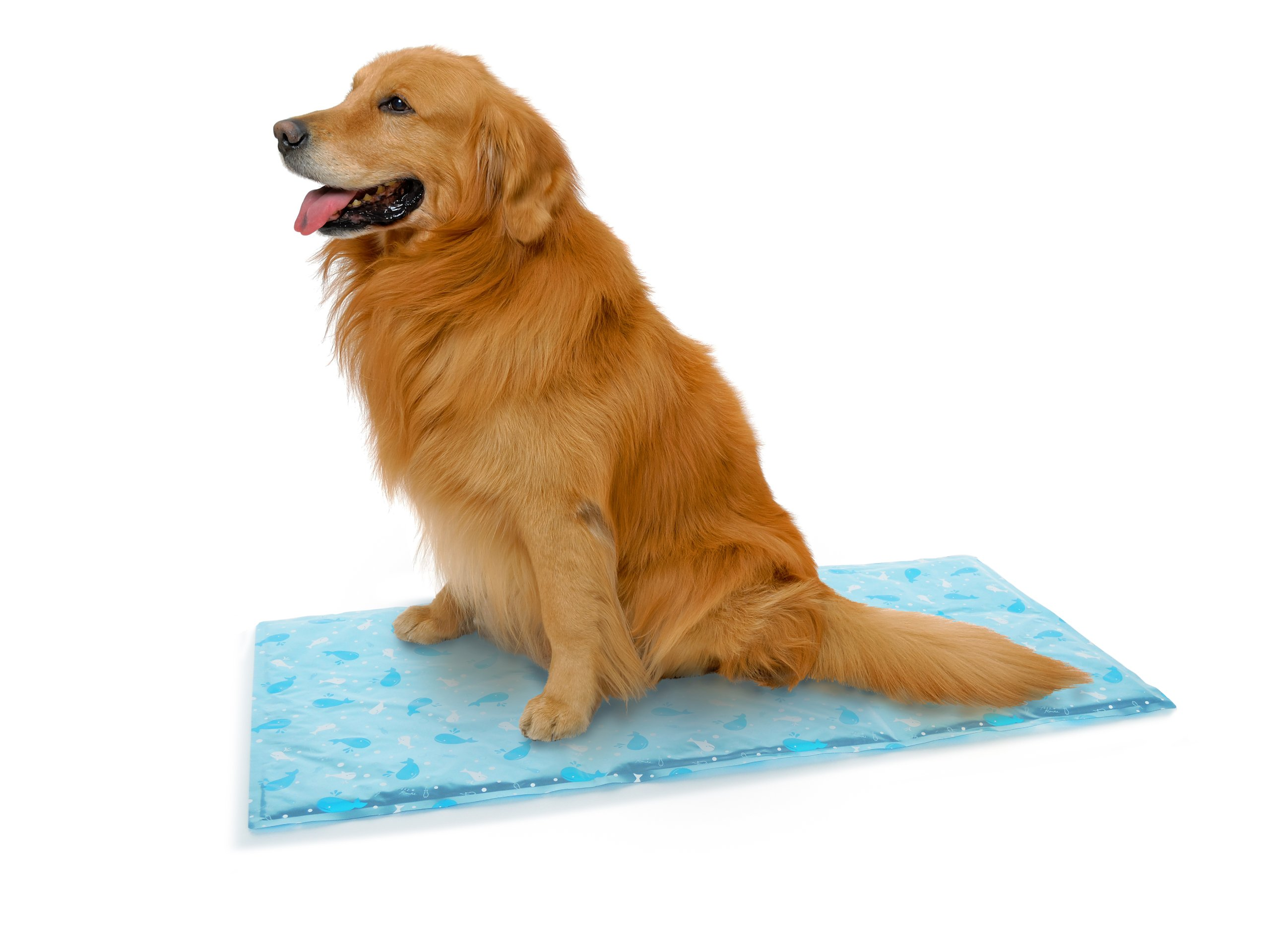 Pez route (Petz Route) Hie Hie antibacterial gel mat Blue L for cats and dogs (japan import)