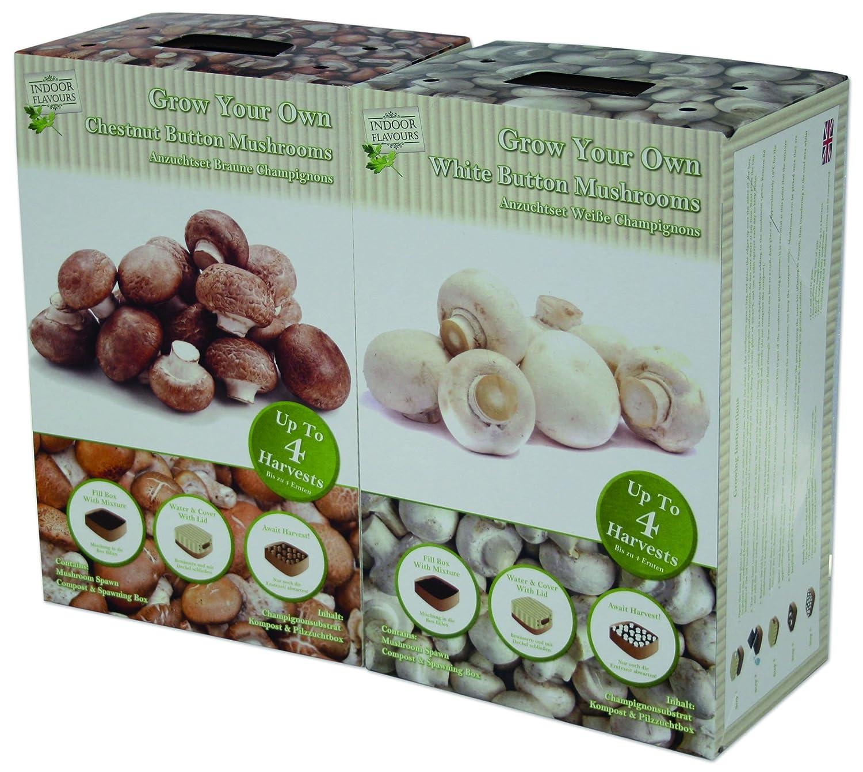 Amazon.de Pflanzenservice Gemüse, Spar Set Champignon-Anzuchtset, weiß/braun, 29x24x19 cm, 909510
