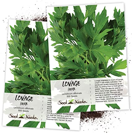 Levisticum officinale HERB LOVAGE 500 SEEDS home growing herbs all year