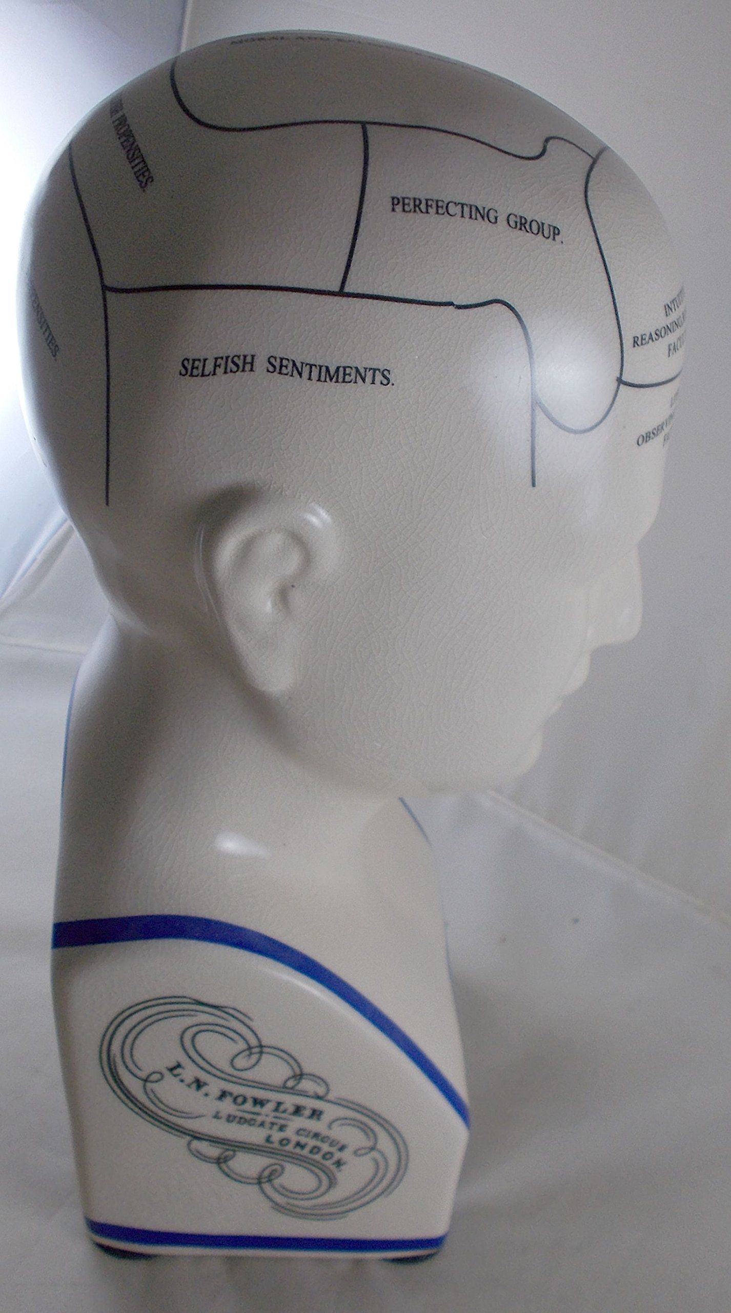 L.N. Fowler Phrenology Head Statue by Magoo's General Store (Image #4)