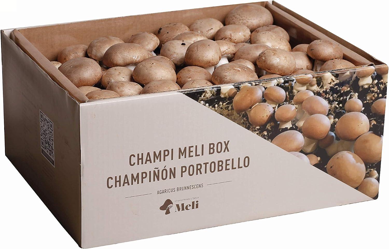 SETAS MELI | Kit Auto Cultivo Champiñon Portobello | Para cultivar en casa | Crece en 10-15 días | Kit perfecto para regalar | Hecho en España