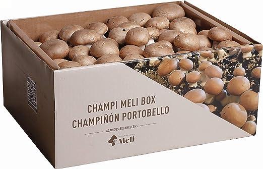 SETAS MELI   Kit Auto Cultivo Champiñon Portobello   Para cultivar en casa   Crece en 10-15 dias   Kit perfecto para regalar   Hecho en España: Amazon.es: Jardín