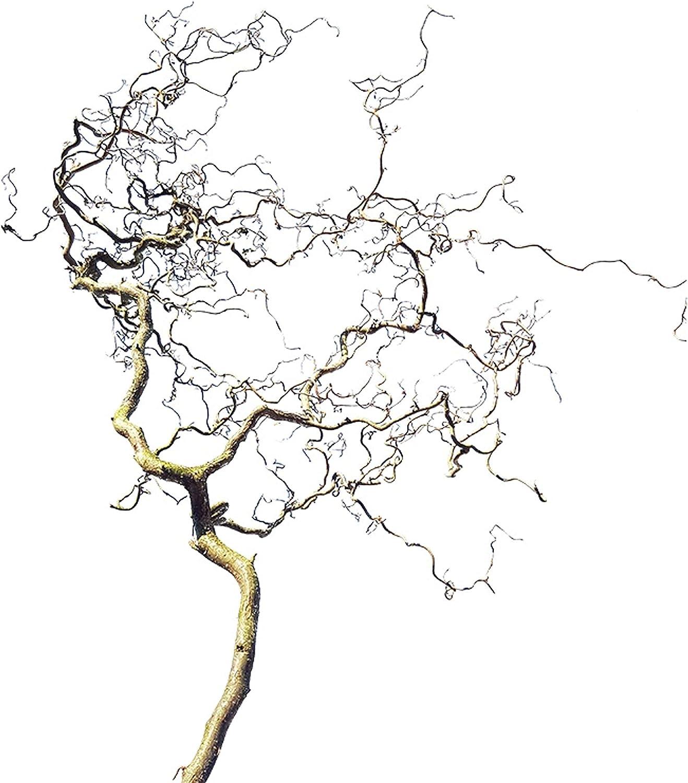 Sacacorchos grande de madera rama pájaro perca ornamento colgante pájaro perca jaula de pájaro (120 cm)