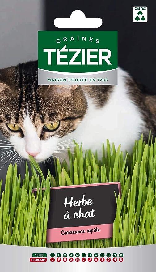 bolsa de semillas Hierba de gato - Tezier: Amazon.es: Jardín