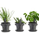 Window Garden Rustic Charm Herb Trio Kit - Grow an Indoor Kitchen Windowsill of Fresh Basil, Chives ,Sage, Plants by Seeds. S
