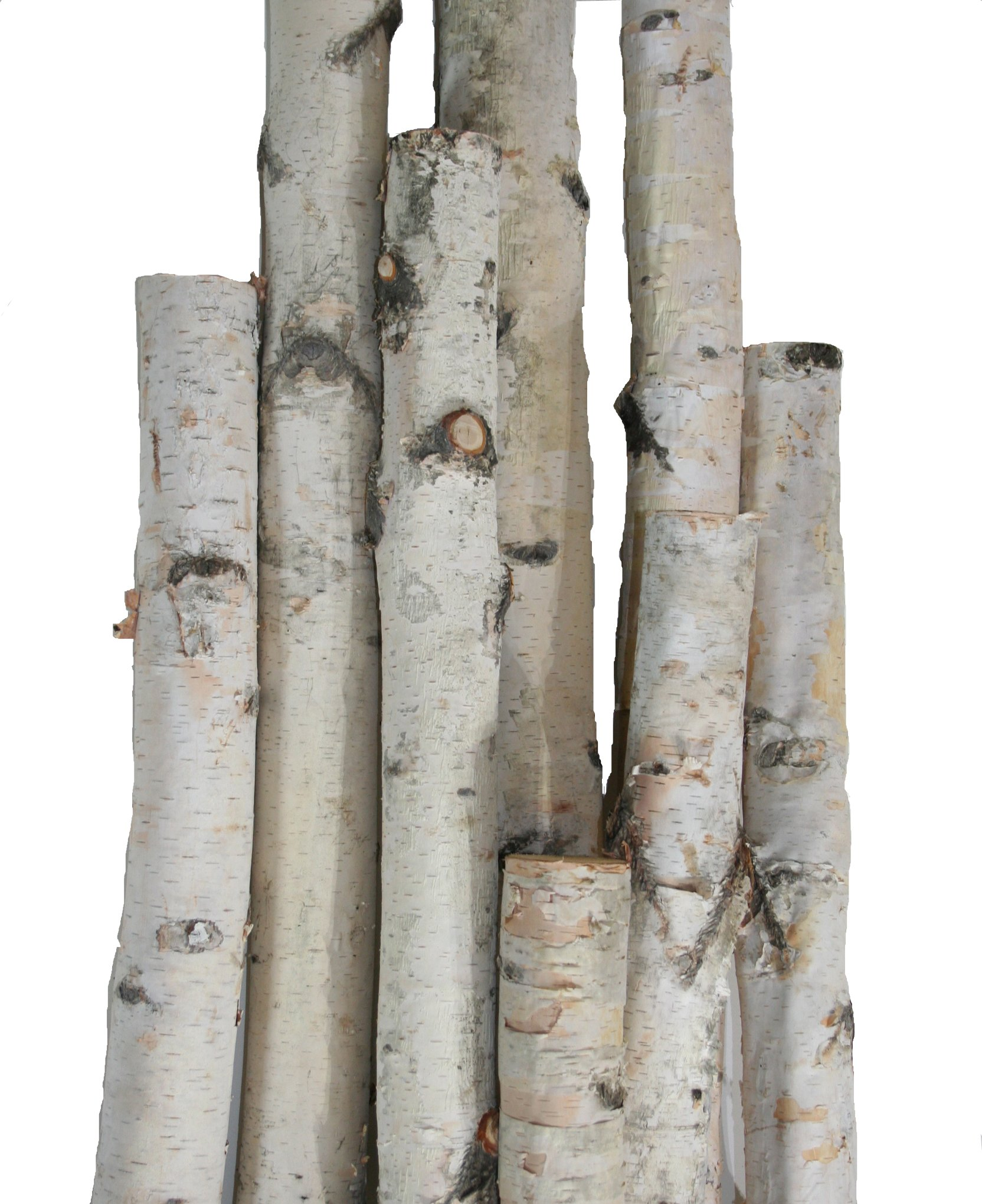 Wilson Enterprises White Birch Pole Pack (X-Large) Set of Birch Poles 1.5-2.5 inch diameter x 6, 7, and 8 feet tall