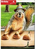 Squirrel Plays Shell Game Funny Birthday Card