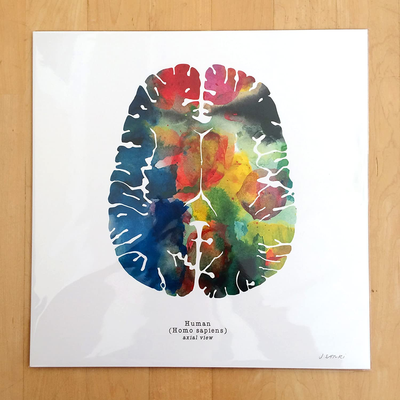 Amazon Axial Watercolor Human Brain Art Print 12 X 12