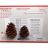 Natural HomeRV Pine Cones From Ponderosa Pine Trees (HRV-PPC-340-B-24) Create Christmas Indoor Outdoor Home Decor Accents Ornament (24)