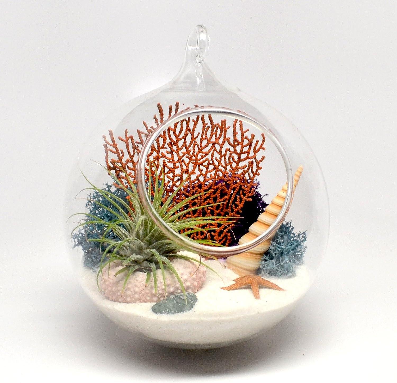 Pixie Glare Hanging Terrarium Ocean Scene with Live Air Plant, Sea Fan, Starfish, Sea Urchin More TAGO White