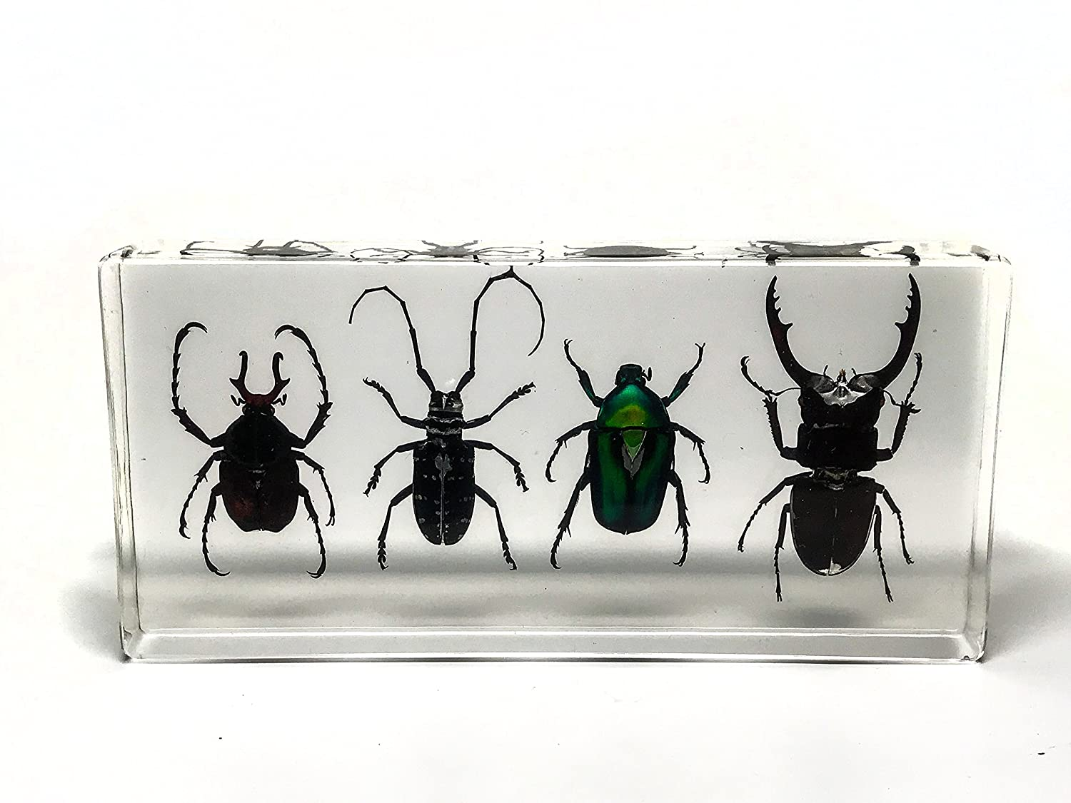 4 Beetles Collection in Lucit, 352,4 g Astro Gallery Of Gems