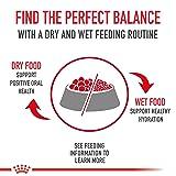 Royal Canin Medium Weight Care Dry Dog Food, 30 lb. bag