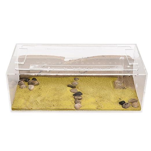 Hormiguero de Arena Grande con Hormigas Gratis (AntHouse.es): Amazon.es: Juguetes y juegos