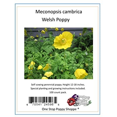 100 Yellow Meconopsis Cambrica Welsh Poppy Flower Seeds. One Stop Poppy Shoppe Brand. : Poppy Plants : Garden & Outdoor