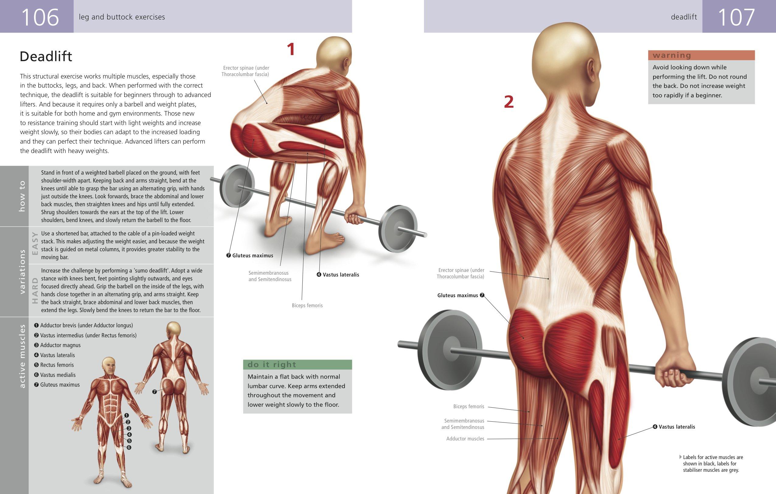 The Student\'s Anatomy of Exercise Manual: Amazon.co.uk: Kenneth ...