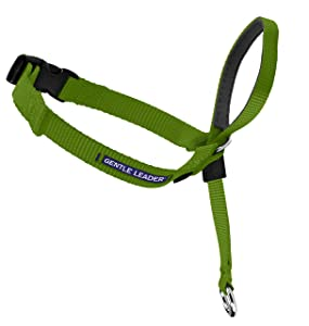 PetSafe Gentle Leader Head Collar with Training DVD, MEDIUM 25-60 LBS., APPLE GREEN
