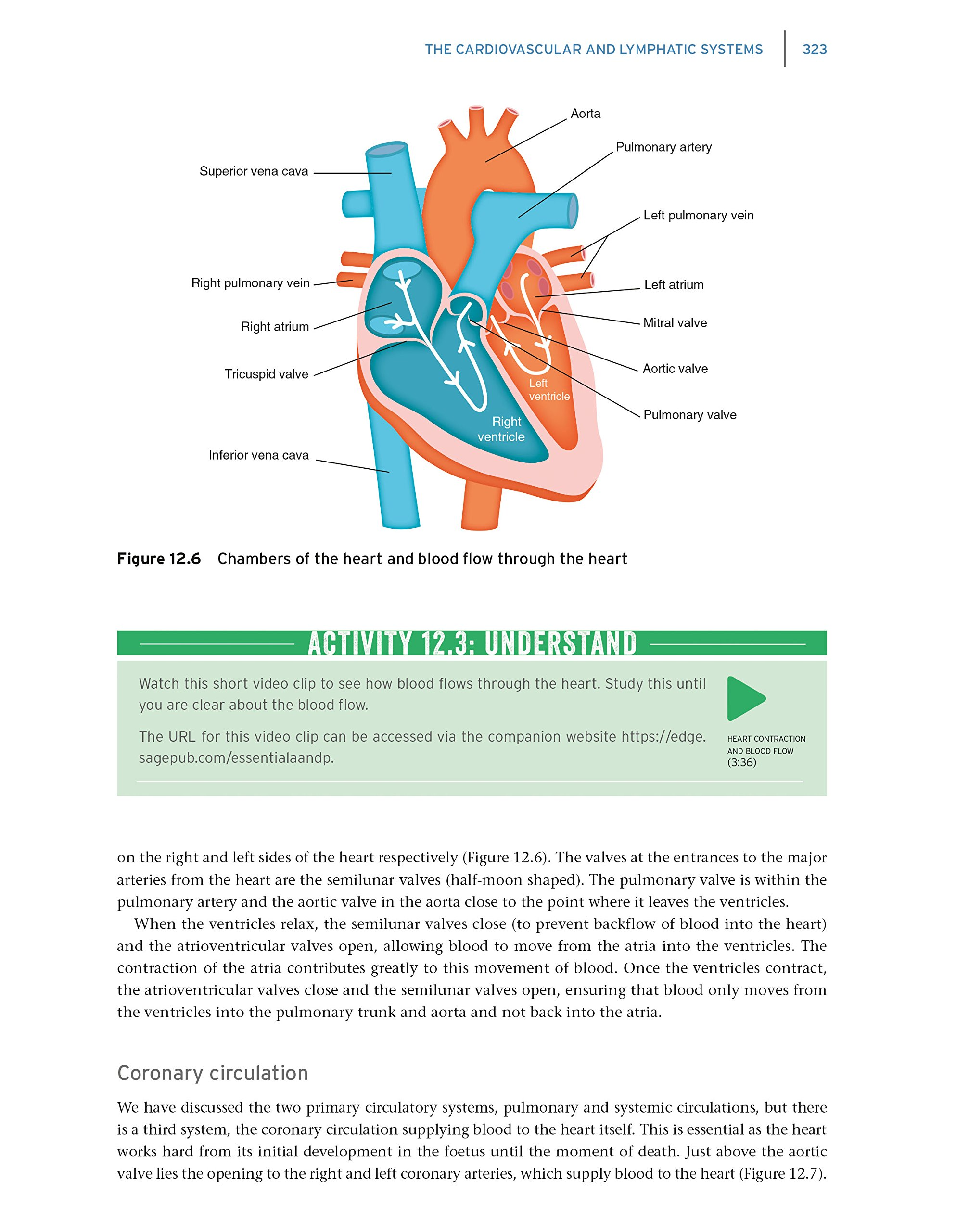 Dorable Is Anatomy And Physiology Hard Online Ensign - Anatomy Ideas ...