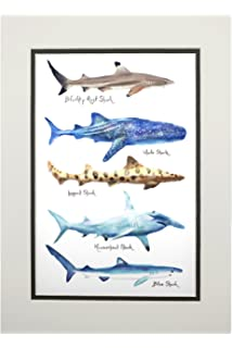 Shark Names - Watercolor (11x14 Double-Matted Art Print, Wall Decor Ready to