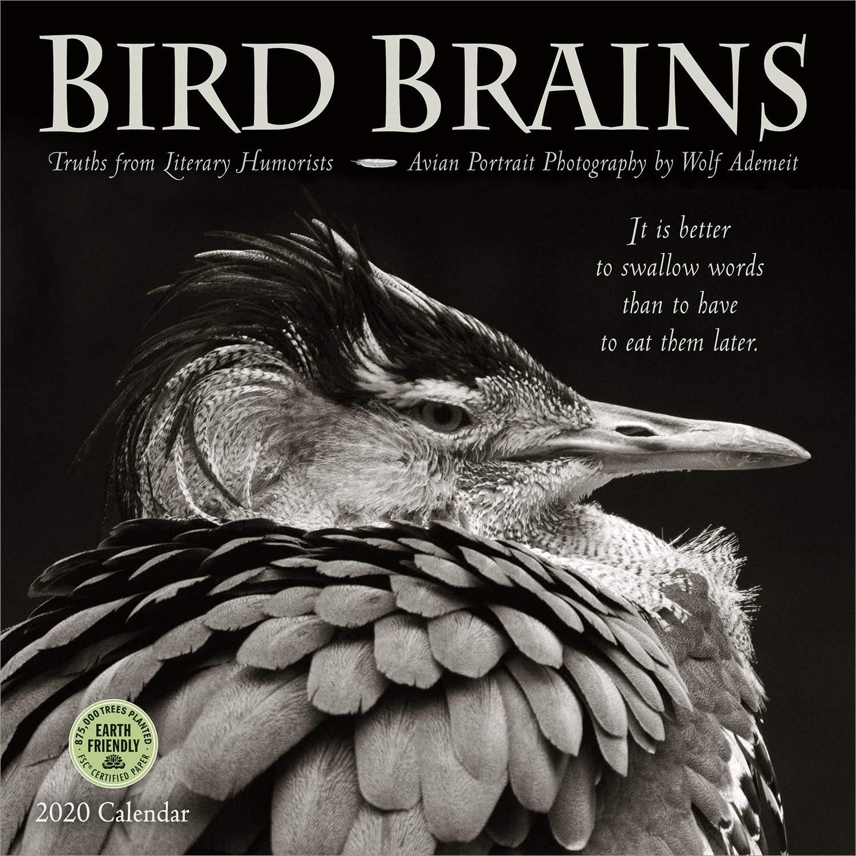 bird brains 2020 wall calendar truths from literary humorists and avian portrait photography