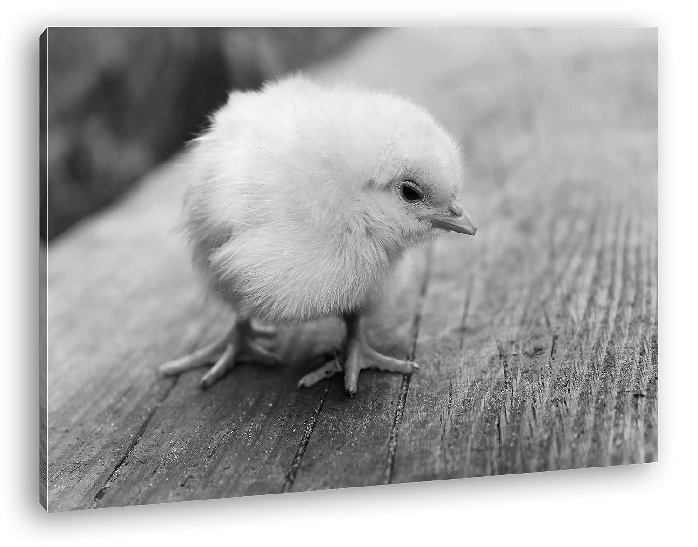 putziges Küken Effekt: Schwarz/Weiß Format: 120x80 als Leinwandbild ...