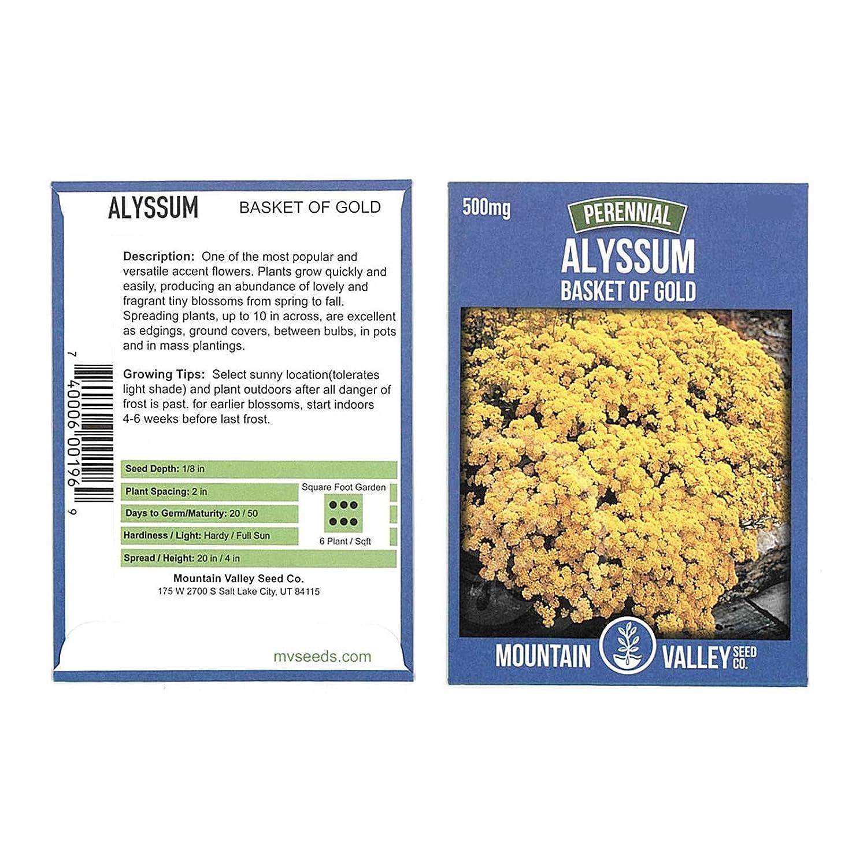 Amazon Alyssum Basket Of Gold Seeds 500 Mg Packet