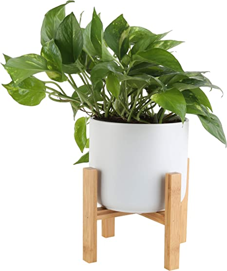 Costa Farms Devil's Ivy, Golden Pothos with 6.5-Inch Wide Mid-Century Modern Planter and Plant Stand Set, White, Fits on Tabletops, Counters