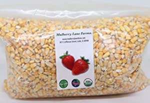 Whole Yellow Corn 5 Pounds, USDA Certified Organic, Non-GMO, Product of USA, Mulberry Lane Farms