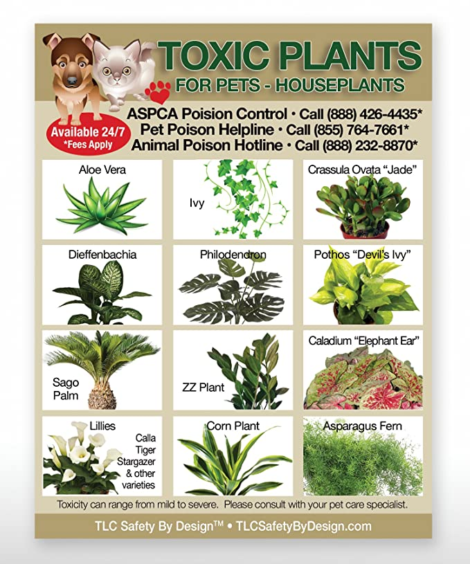 Amazon.com: Toxic House Plants Poison Pets Dogs Cats Emergency ICE on safe indoor plants for cats, safe outdoor plants for cats, safe herbs for cats, safe vines for cats, safe food for cats,