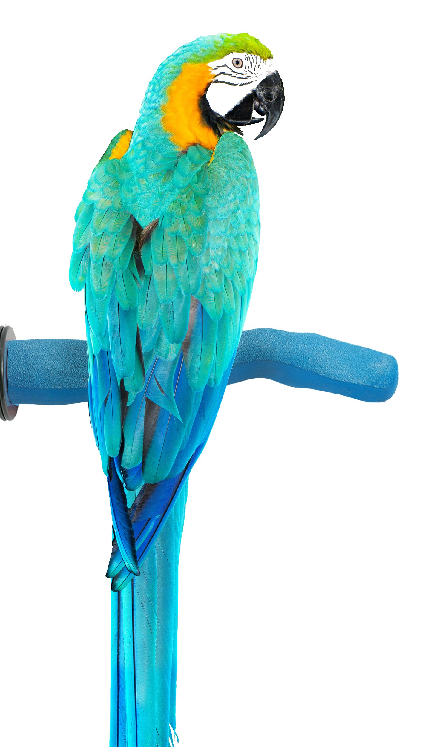 Sweet Feet and Beak Safety Pumice Perch for Birds Features Real Pumice to Trim Nails and Beak and Promote Healthy Feet - Safe and Non-Toxic, for Bird Cages - [ Large/Blue ] by Sweet Feet and Beak