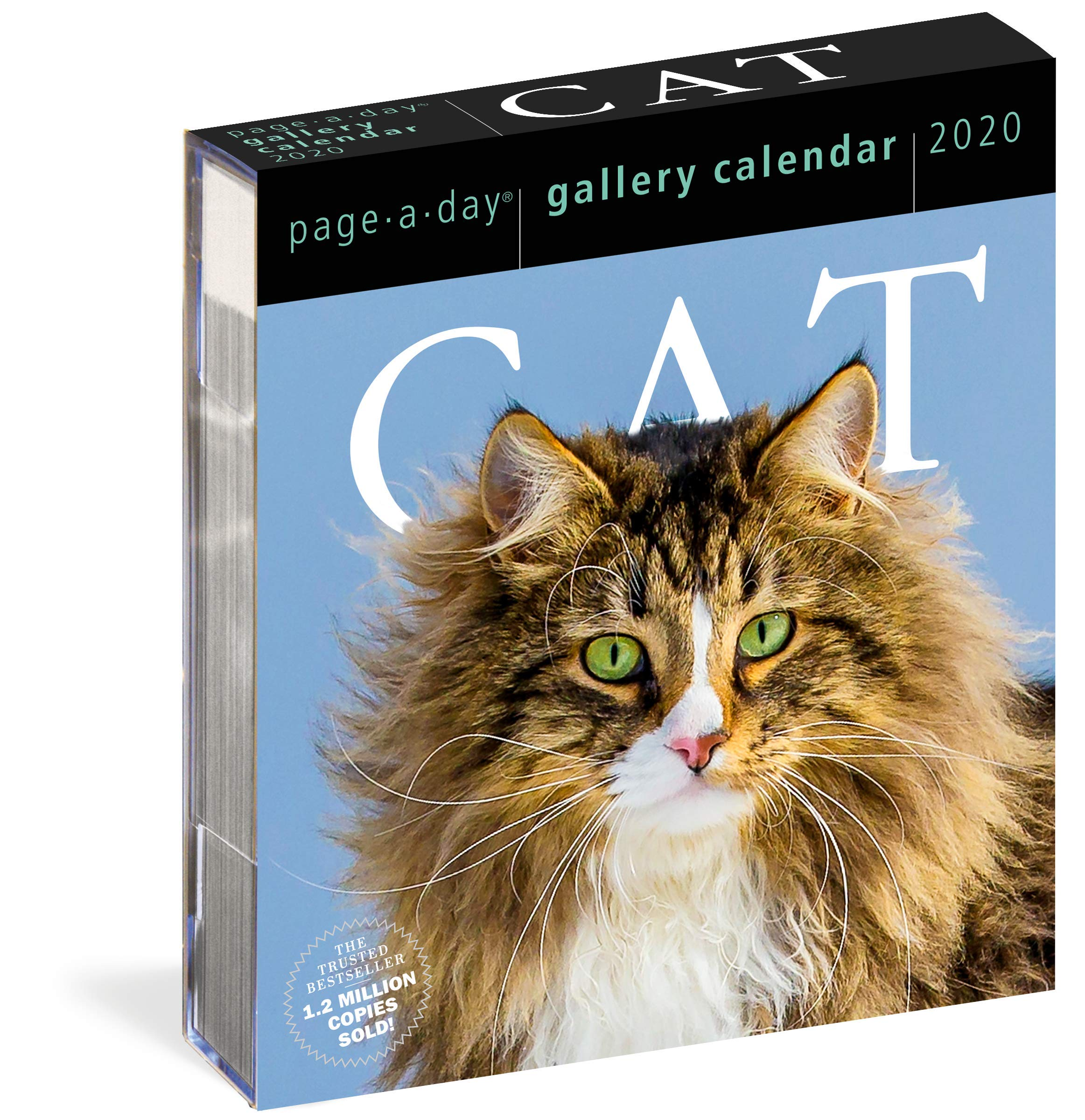 Best Cat Toys 2020.2020 Cat Page A Day Gallery Calendar Amazon Co Uk Workman