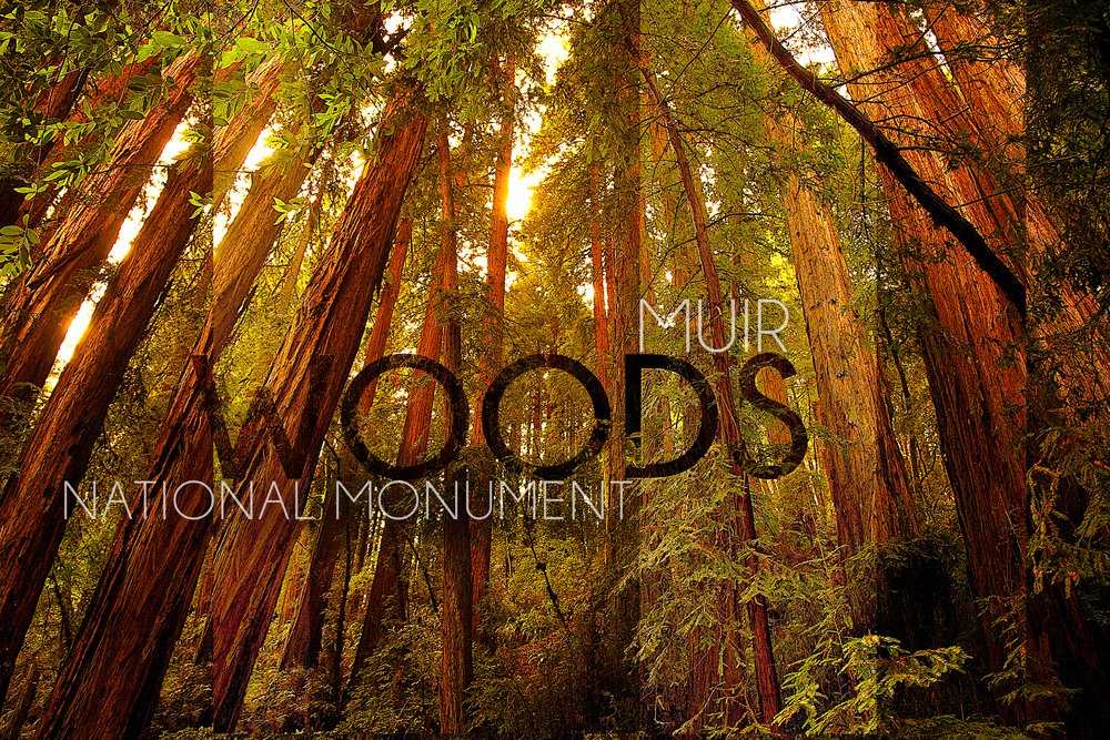 Muir Woods National Monument、カリフォルニア – フォレストビュー# 2写真 36 x 54 Giclee Print LANT-51863-36x54 36 x 54 Giclee Print  B017E9YMNA