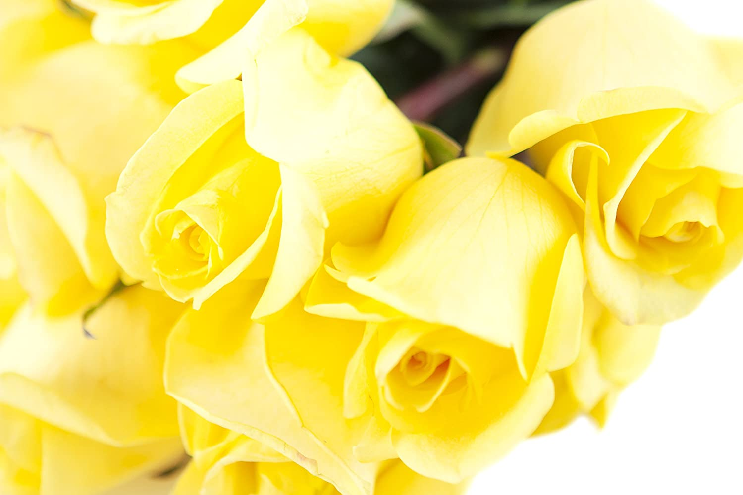 Amazon Kabloom Bouquet Of Sunshine Yellow Roses 12 Fresh Cut