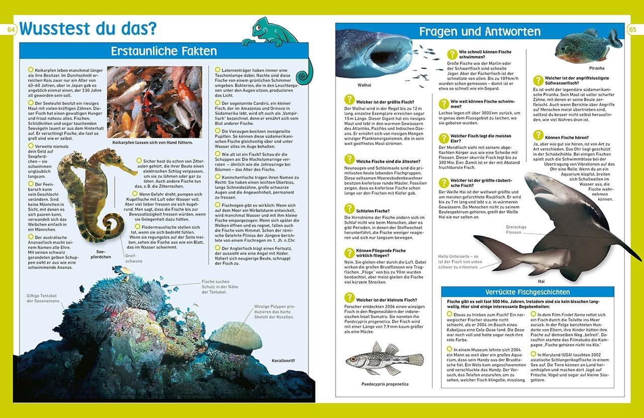 memo Wissen entdecken. Fische: Riffe, Teiche, Tiefsee. Das Buch mit ...
