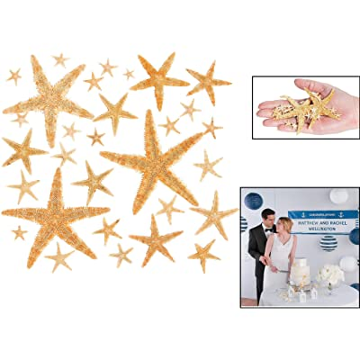 Fun Express Real Starfish Decoration (30 Piece): Toys & Games