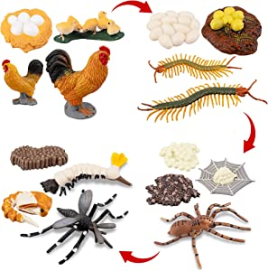 TOYMANY 16PCS Farm Animals Figurines Life Cycle of Chicken Rooster Centipede Spider Mosquito, Plastic Food Chain Animal Figures Toy Kit Educational School Project for Kids Toddlers