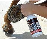 SBS Equine Item 316 hoof Treatment, 16 fl. Oz. Spray