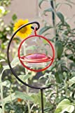 Best Small Glass Hummingbird Feeder with Red Perch - New Bee & Wasp Proof Design - Hummers Love This Feeder!
