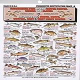 b52279e17d8d7 Amazon.com : Fish IDZ Trading Cards - Set of 48 Freshwater Fish ...