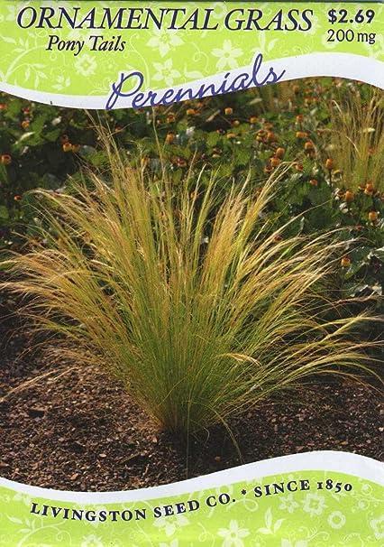 Pictures Of Ornamental Grass Amazon ornamental grass pony tails perennial grass ornamental grass pony tails perennial workwithnaturefo