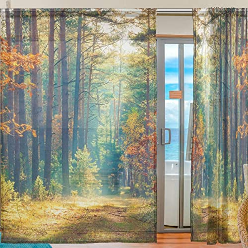Deal of the week: Semi Sheer Curtains Sunrise Autumn Deciduous Forest Wild Woodland Voile Window Curtain Panels