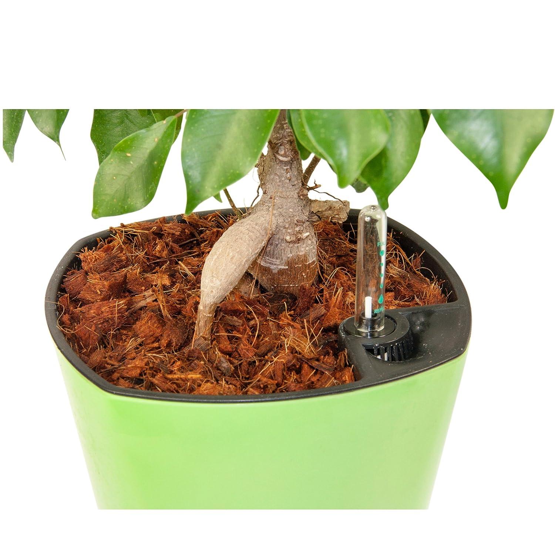 Amazon.com : Fiber Mulch (5 Quarts) Organic Potting Mulch + ...