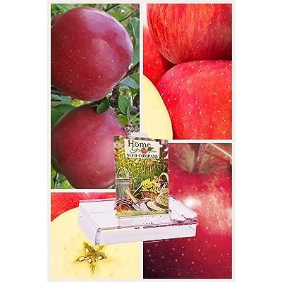 Homegrown Apple Seeds, Bulk Seeds, Fuji Wonder Apple Tree, Quantity (16) : Garden & Outdoor