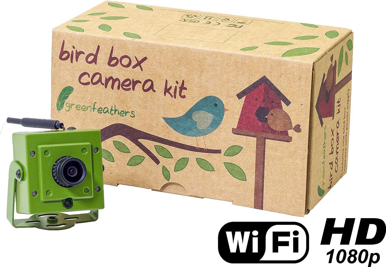 Green Feathers Camara Wi-Fi 1080p para Caja Nido Vigilancia Pajaros Monitor de Vida Silvestre De 2MP HD, Vision Nocturna, Grabacion MicroSD, Transmicion Directa Tablet o Movil, con Enchufe Europeo