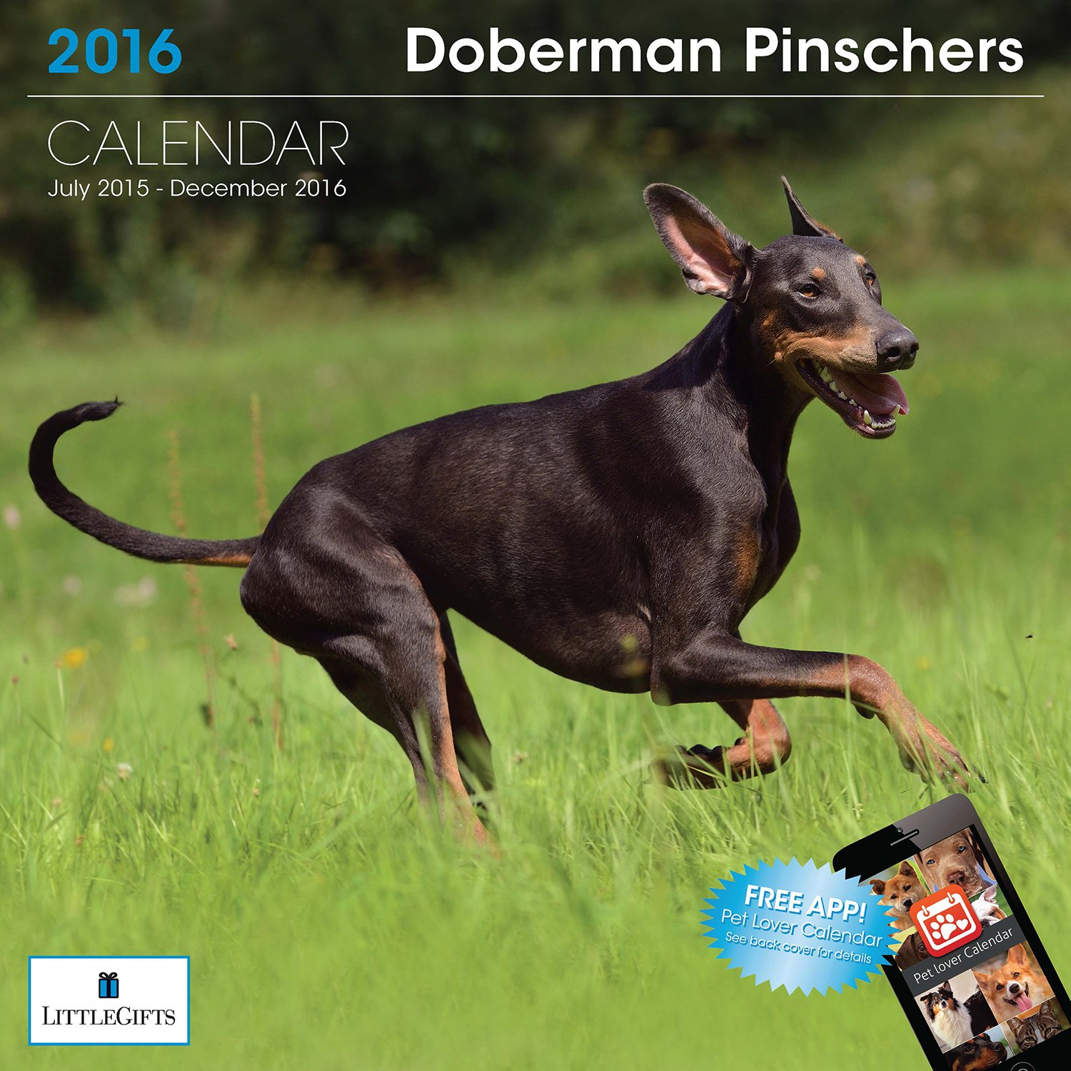 LittleGifts 2016 Doberman calendario (1239) (1239) calendario c0ad7e