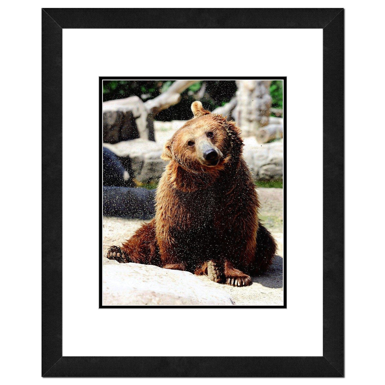 Grizzley Bear Photo