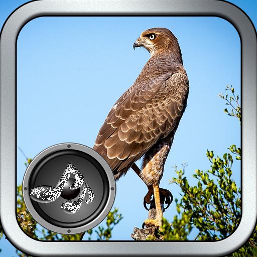 Wild Bird Song (Types Of Bird Seed For Wild Birds)