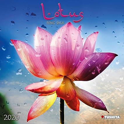 Calendario 2020 Lotus - Feng Shui - Flores - Zen ...