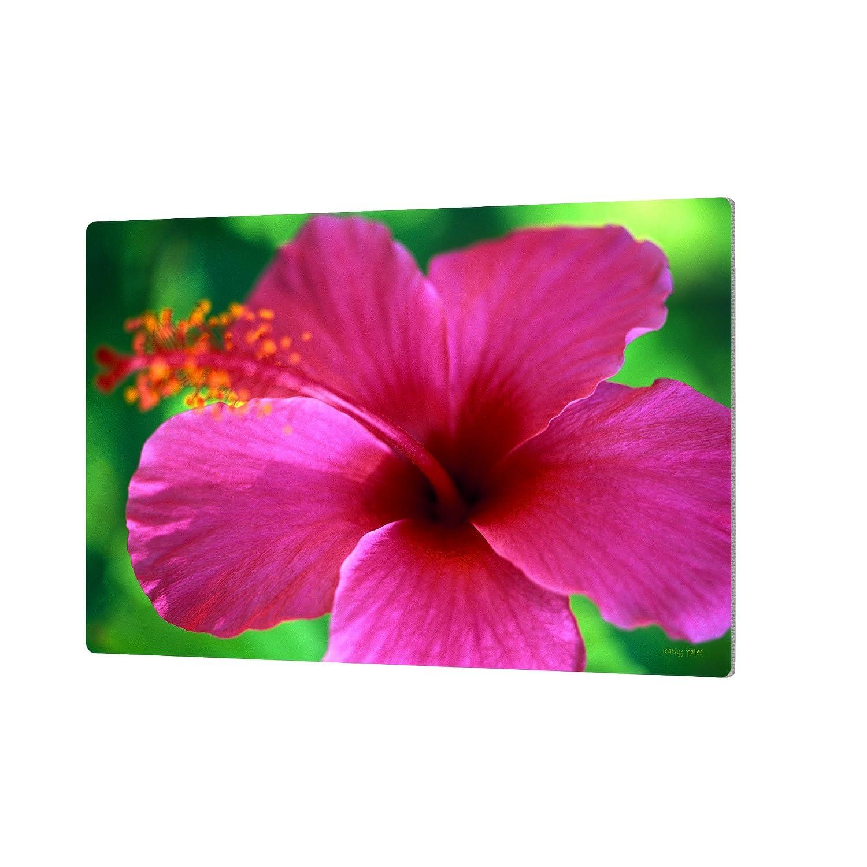 24 by 36 ArtWall Kathy Yates Maui Pink Hibiscus Artmetalz Aluminum Print